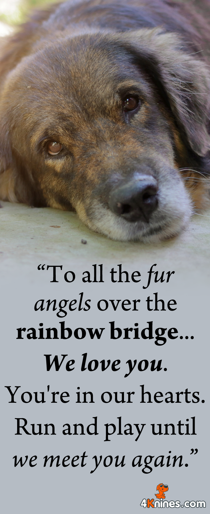 Remembering All Our Dearest Pets Who Have Crossed The Rainbow Bridge Worldpetmemorialday Dog Poems I Love Dogs Dogs