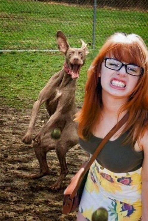 42 Most Epic Dog Photobombs On Pinterest Cute Animals Funny