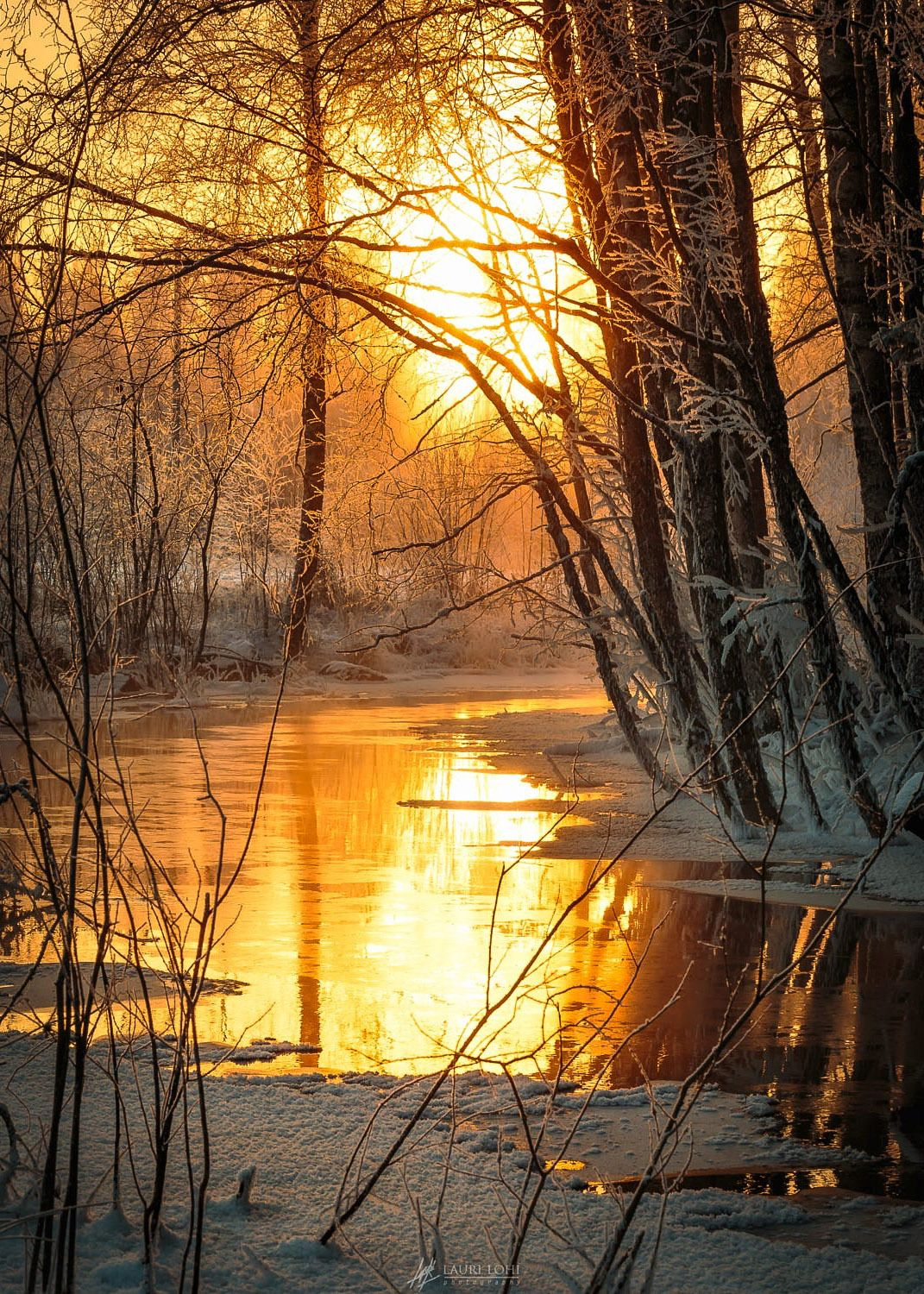 Amazing Winter Sunset Nature Photography Unique Beautiful Winter Morning Light Reflecting From the Surface Of forest