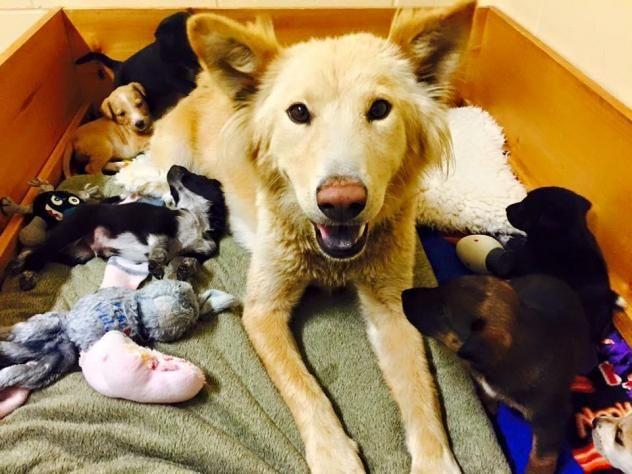 Adopt Jessi On Dogs Humane Society Husky Mix