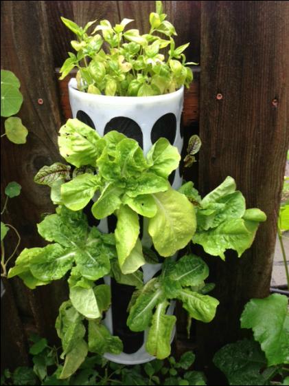 Vertical garden from Ikea plastic bag holder! | Vertical ...