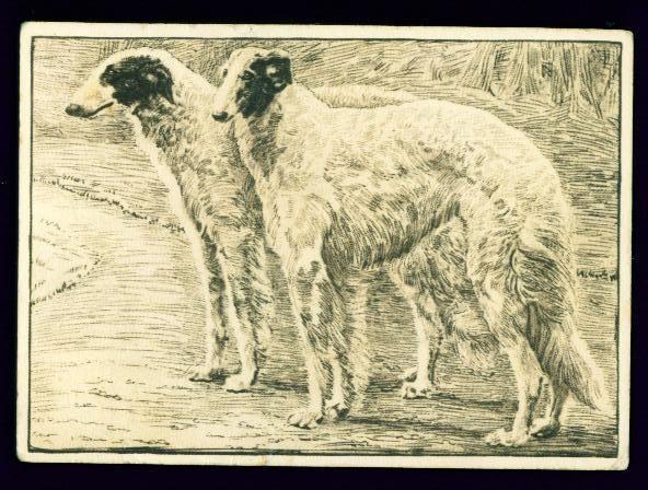 SCARCE Card 1938 Borzoi Dogs Tobacco Card Ardath Dog Studies Series
