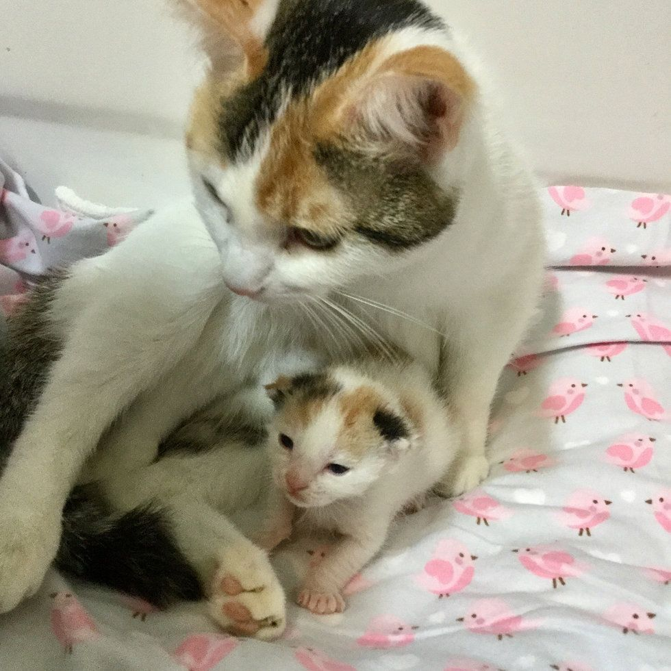 Pin By Miracle Kelly On Cats Mama Cat Cats Baby Animals
