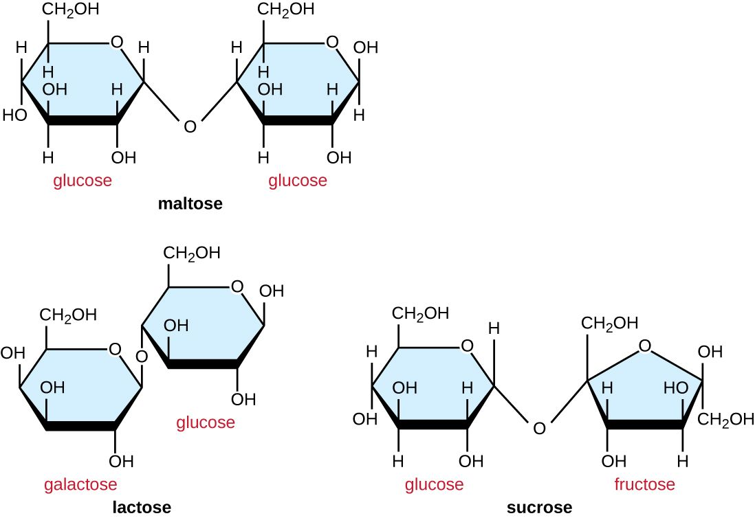 Image result for sucrose maltose and lactose | Organic ...