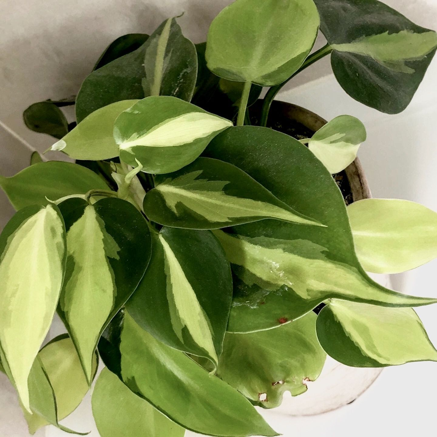 10 Poisonous Indoor Plants Your Children and Pets Should Avoid - My Tasteful Space#avoid #children #indoor #pets #plants #poisonous #space #tasteful