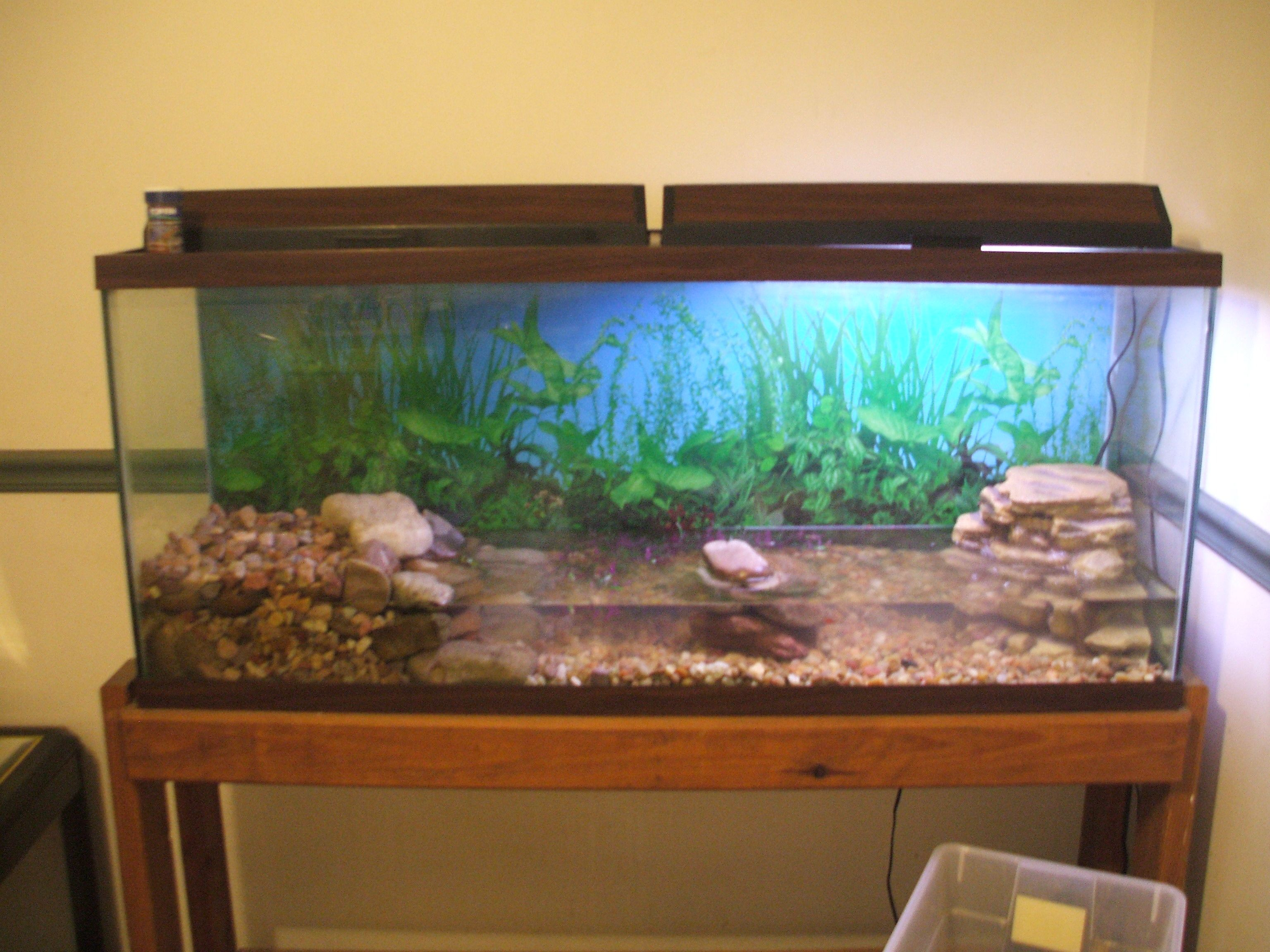 This is a 55 gallon tank that I have set up for amphibians It has 2