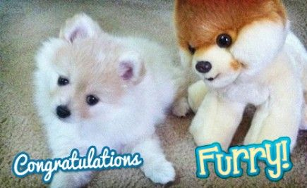 "Congratulations to our Pet of the Month for July- Furry! Furry's owner is Wambie girl Ellenya. What's Furry like? Here's what Ellenya said: ""This is my dog Furry, she's very hyperactive and loves to slide around the ground trying to get the toy. She's still in months, she's 8 months old!""  Congrats once more to Furry and Ellenya, and thanks to everyone who sent in their pets this month!!! See you next month for another round of adorable pets. If you want to enter your pet for next month's"
