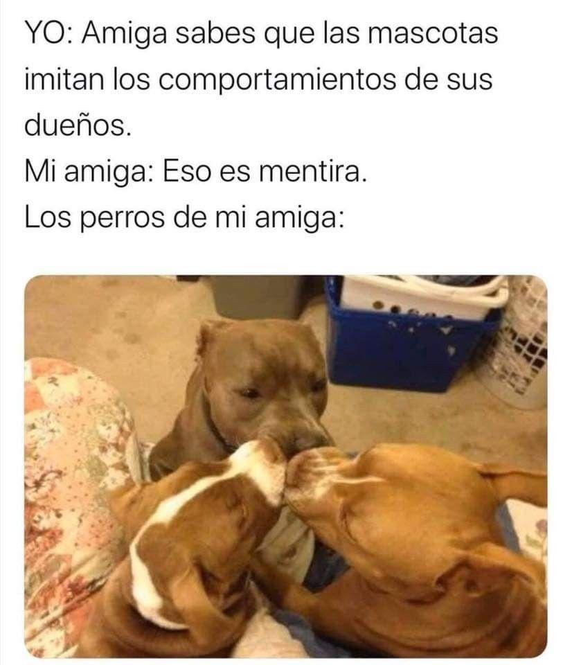 Pin De Meme En Animales Imagenes Videos Y Memes Perros Imagenes De Animales Mascotas