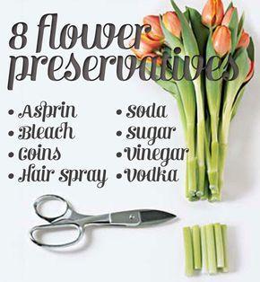 How To Make Flowers Last Longer 8 Pro Tricks Flowers Last Longer How To Preserve Flowers Flower Food