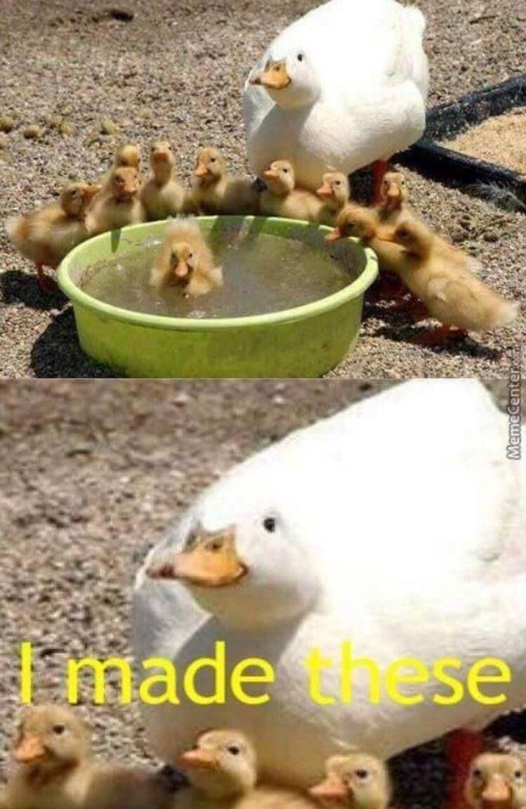 All My Ducks In A Row Duck Memes Cute Funny Animals Cute Animals