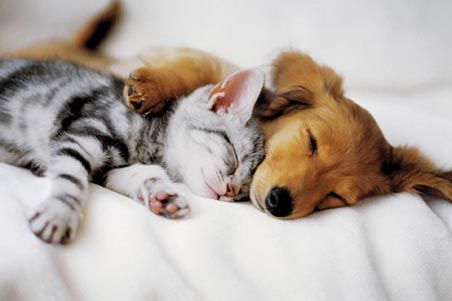Image result for cute dog cuddles