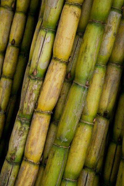 Sugar Cane Caña De Azucar Caña De Azucar Frutas Y Vegetales Frutas Tropicales