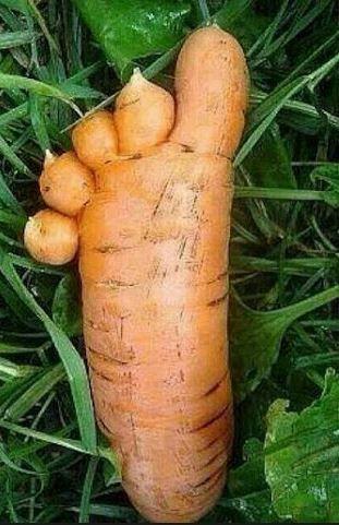 toe veggie or jam nature funny vegetables weird fruit funny rh pinterest com