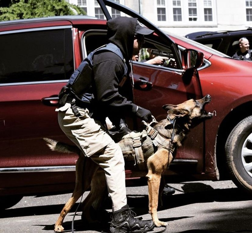 Long Line Vehicle Extraction By Police K9 Amidst Smoke And Burst Gunfire Photo Police K9 Is Equipped With T Military Working Dogs Police K9 Working Dogs