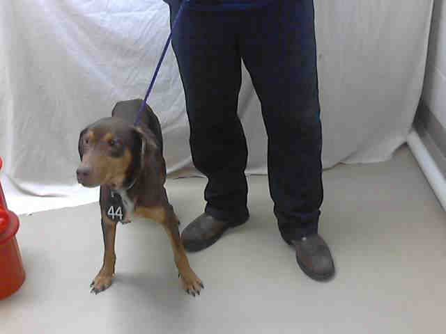 Texas Id A397465 Is A 1yo Doberman Pinscher Mix In Need Of A Loving Adopter Rescue At Harris County Public Health I Love Dogs Doberman Pinscher Adoption