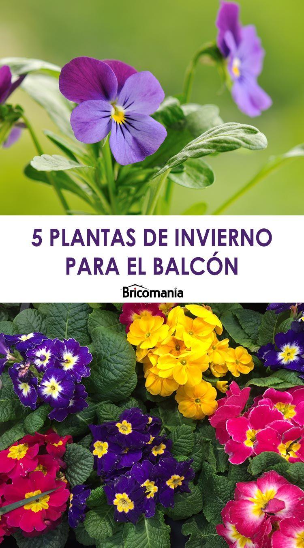 5 plantas de invierno para el balcón – Jardinatis