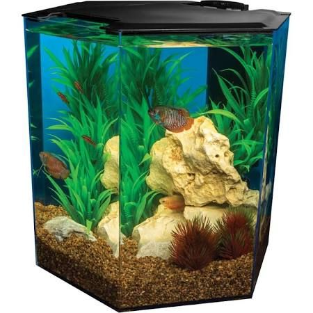 Marineland 5 Gallon Escape Hexagon Aquarium Size 5 Gal Aquarium Petsmart Petsmart Animals