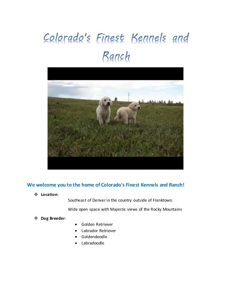 Get Well Trained Dog From Colorado S Finest Kennel And Ranch