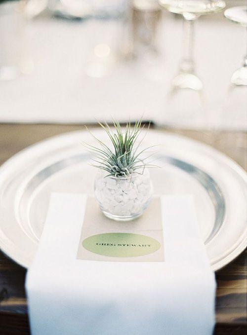 In Season Now: Wedding-Worthy Air Plants   Wedding Favors ...
