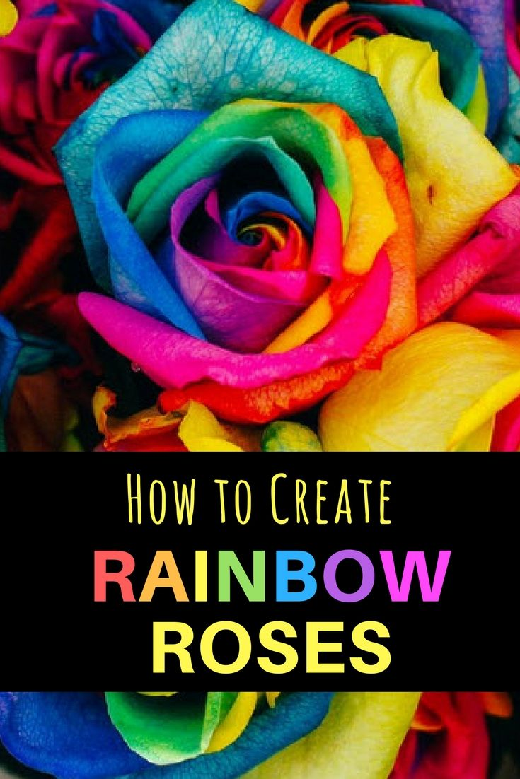 Rainbow roses are just the common roses that have been artificially colored. These flowers are usually bright with various colors, hence the use of the . . . #rainbowroses