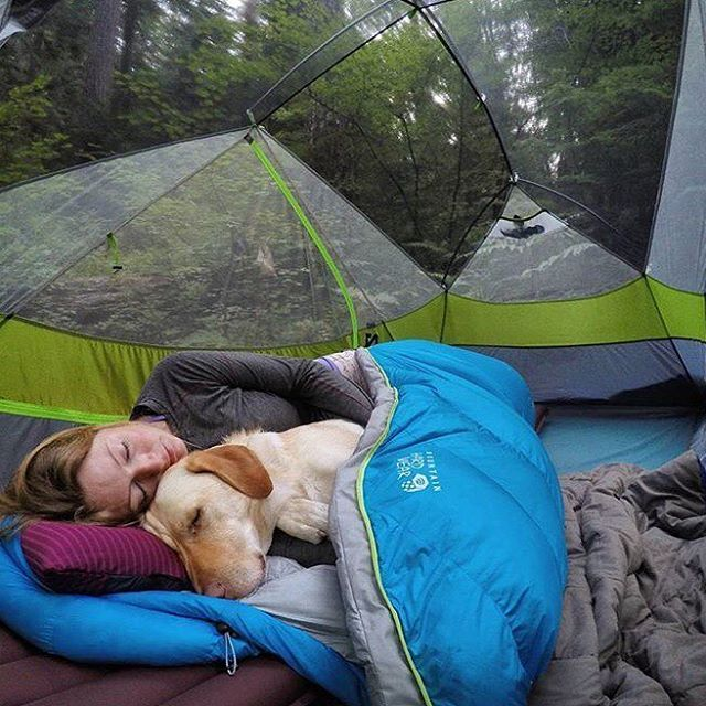 Mornings like this #campingwithdogs @beccatarbox | Dogs in Tents in