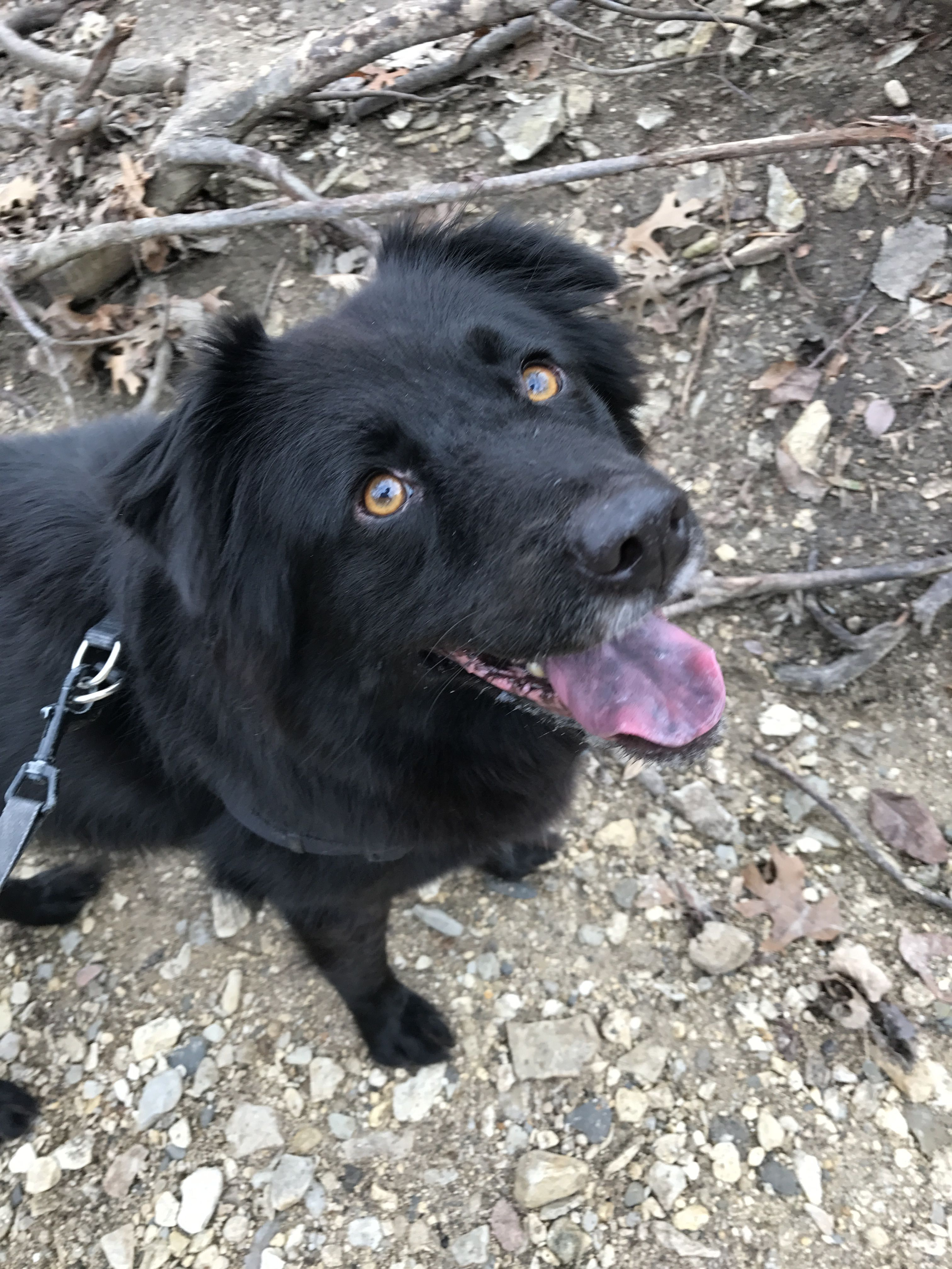 Bear The Border Collie Chow Mix Check Out That Spotted Tongue