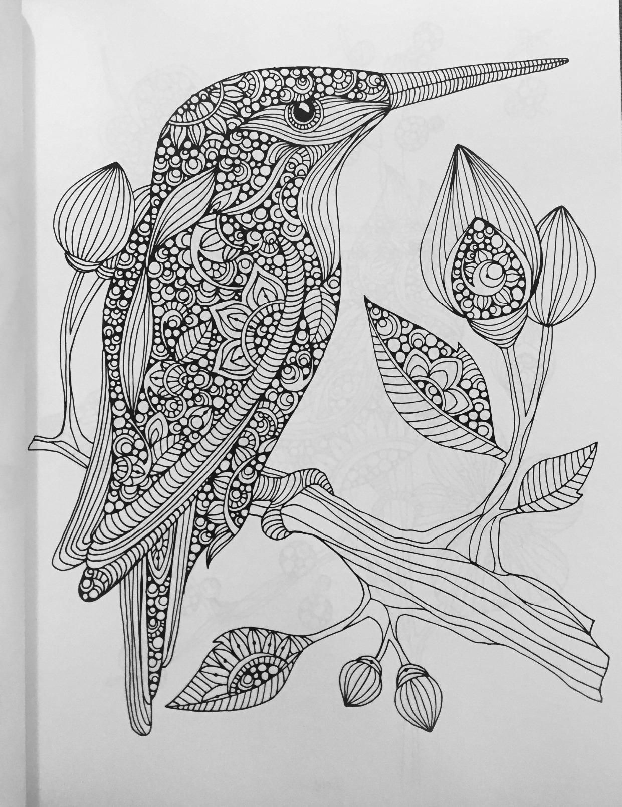 Amazon.com: Creative Coloring Birds: Art Activity Pages to Relax and ...