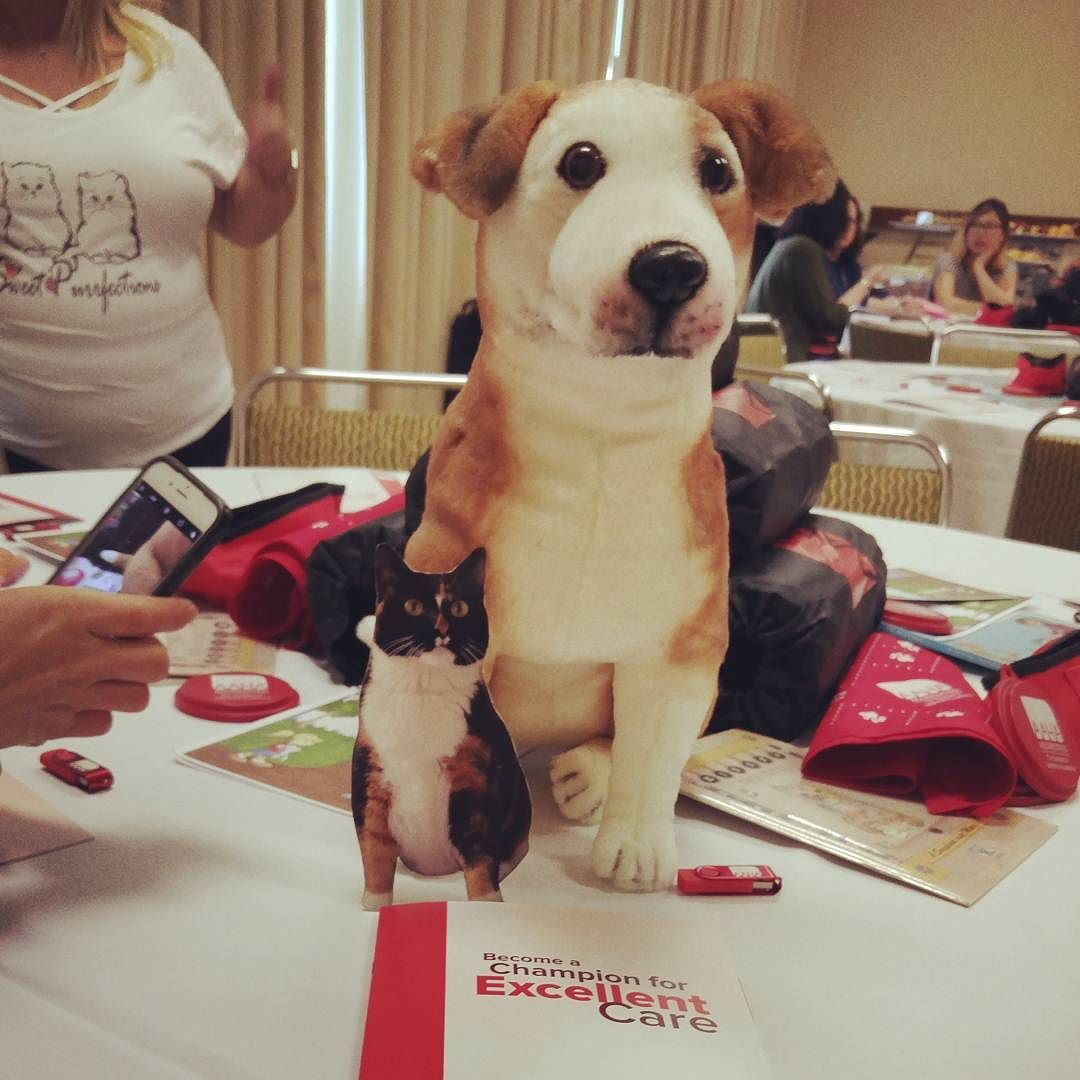 19+ All care animal clinic ideas in 2021