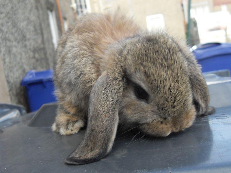 I love this little guy. He looks like Thumper | Animals ...
