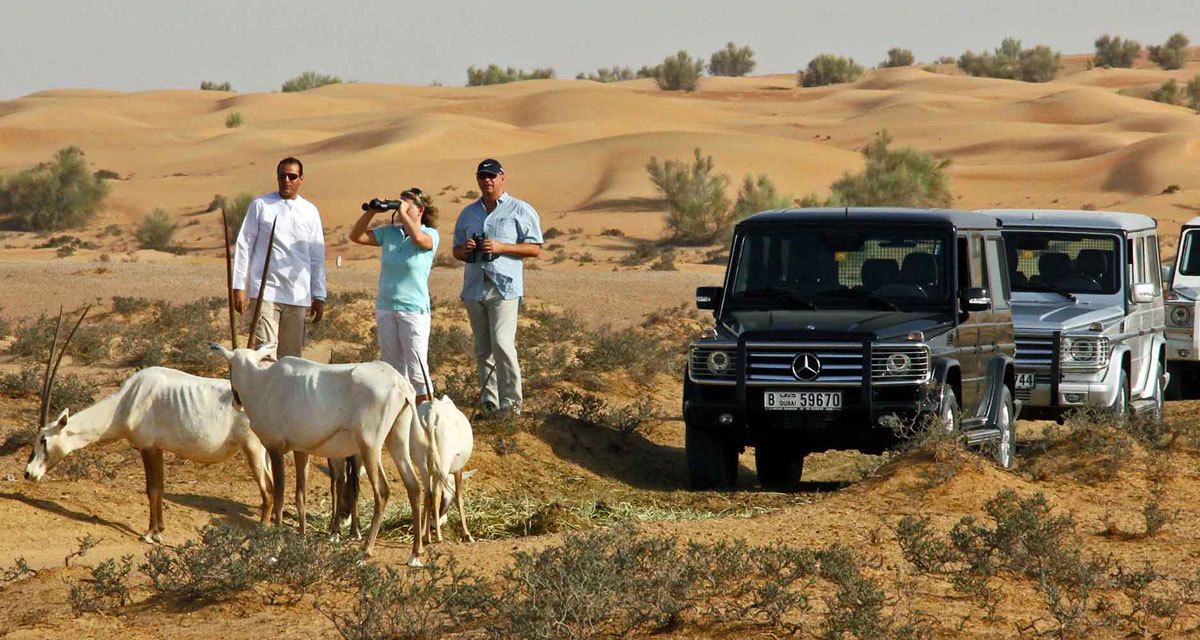 Дубай сафари лучшие курорты болгарии рейтинг