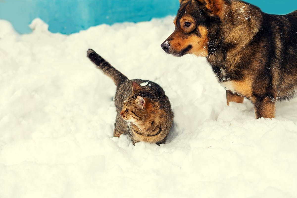 10 Holiday Hazards That Cause Pet Emergencies (and Big Vet