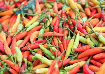paprika nachreifen garten paprika und chilli pflanzen paprika paprika pflanzen und gr ne. Black Bedroom Furniture Sets. Home Design Ideas