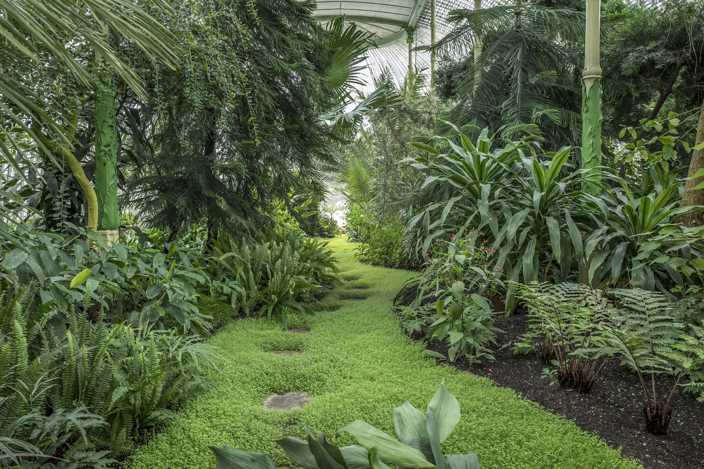 Beautiful greenery in the Lednice-Valtice conservatory in the Czech Republic.