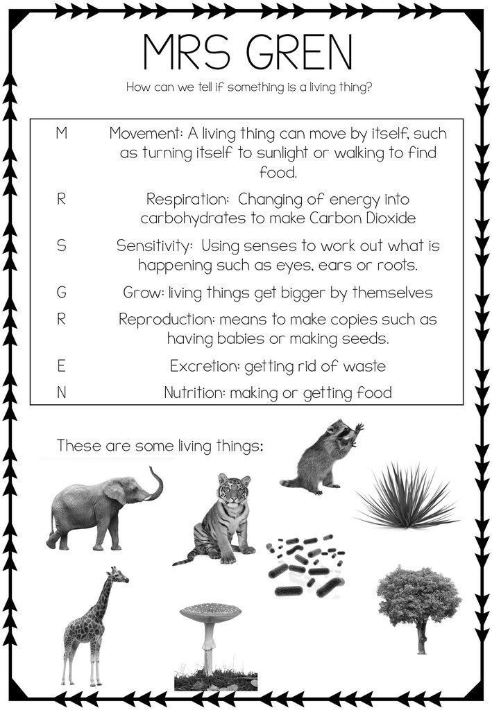 MRS GREN worksheet | All about Science! | Biology lessons ...