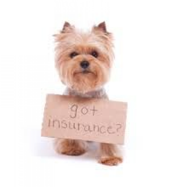 Pethealth Pet Health Dog Insurance Pet Health In 2020
