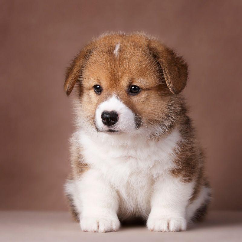 правило при фото собак разных пород щенки убеждению