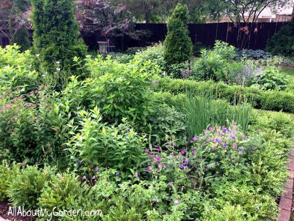 The Mid June Garden