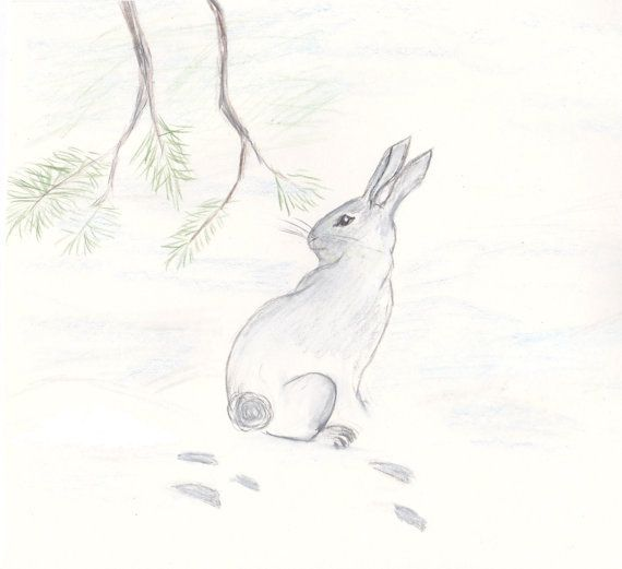 Original Drawing Rabbit Nursery Art Colored Pencil on Etsy