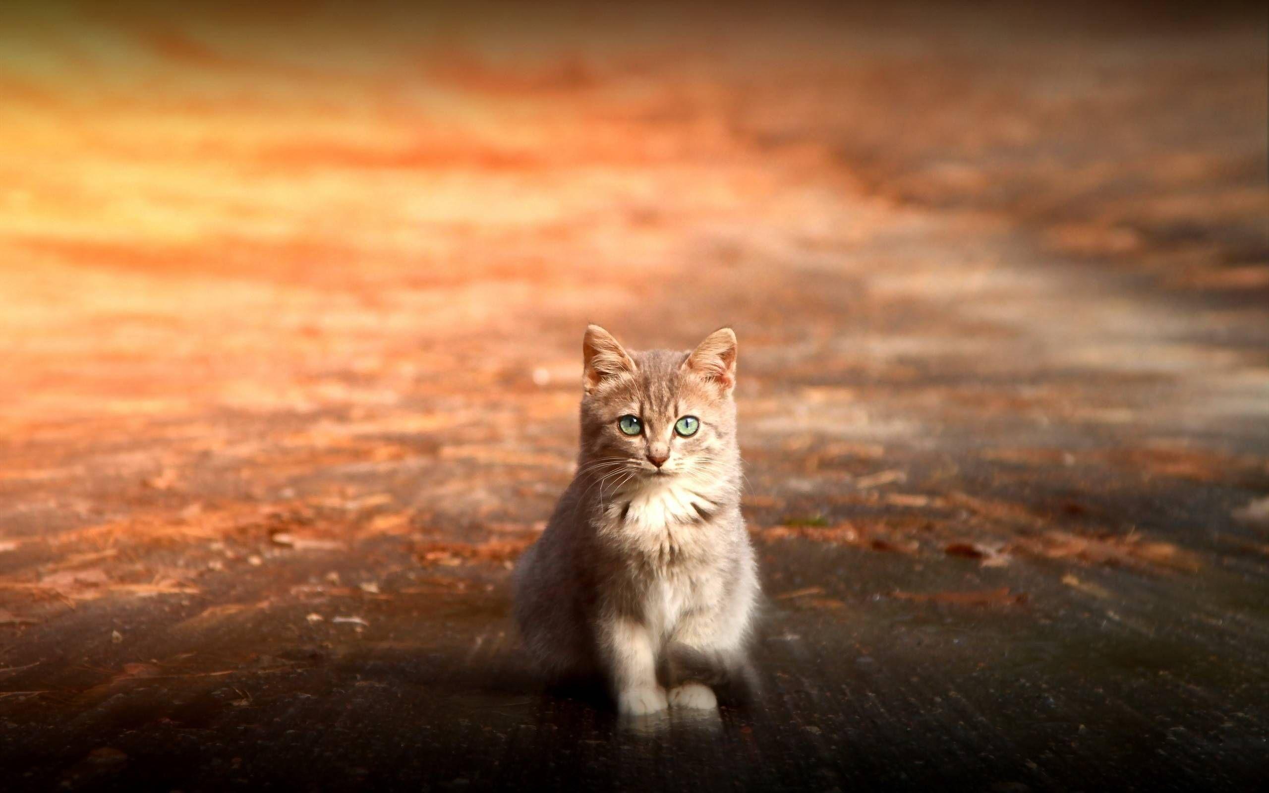 Пин от пользователя Алёна Таланова на доске Мурлыка-кот ...