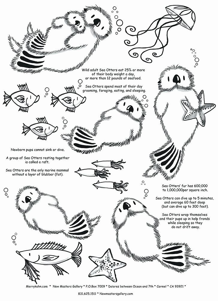 32 Sea Otter Coloring Page in 2020   Baby sea otters ...