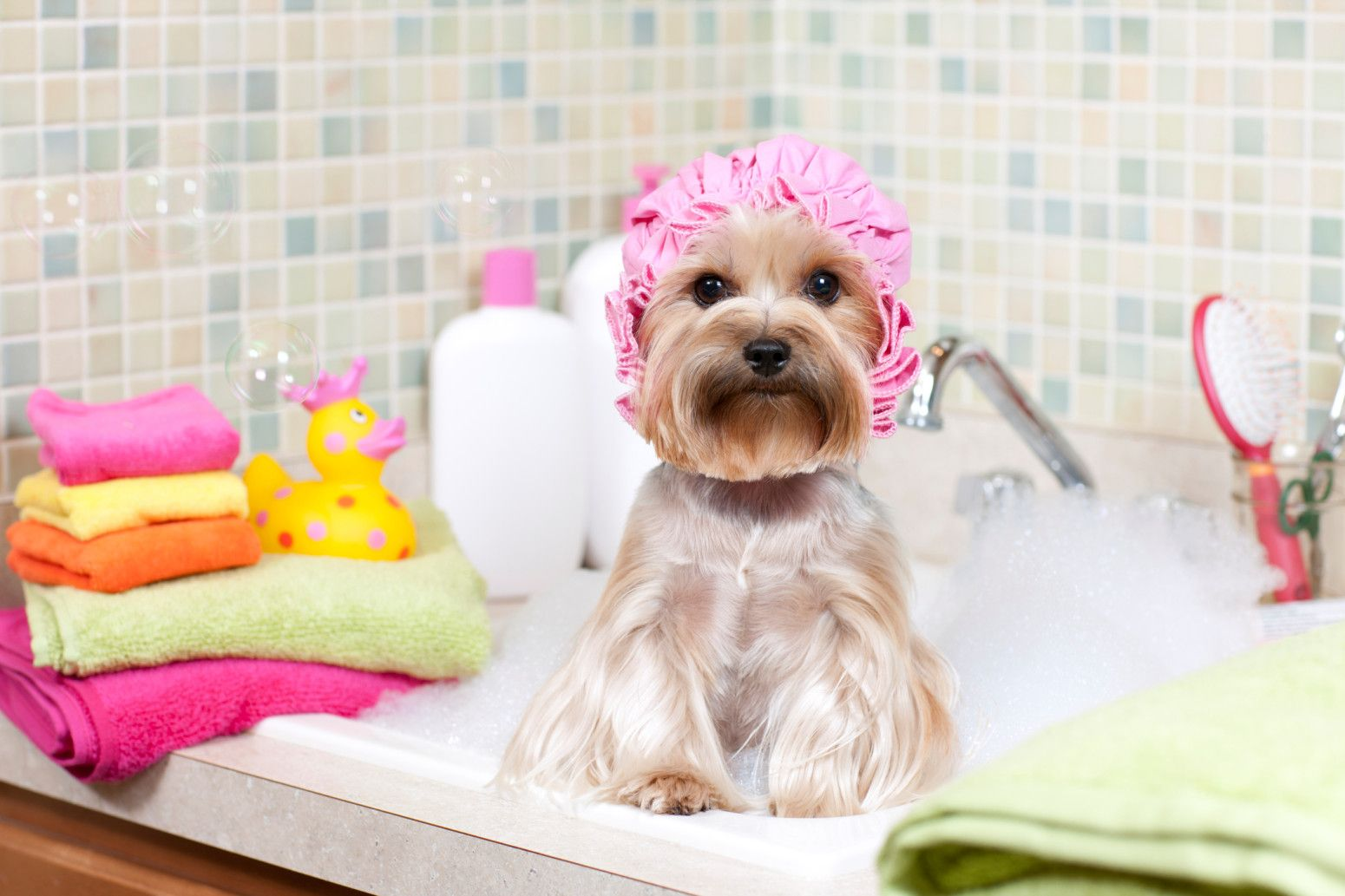 This Is The Most Effective Way To Practice Self Care Pet