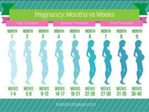 78cdf6465eaff When does 3rd trimester start? - July 2017 Babies - WhatToExpect.com ...
