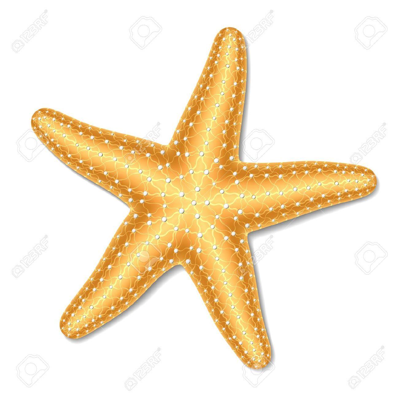 Starfish Clipart Google Search Deniz Yildizi Cizim Yildiz