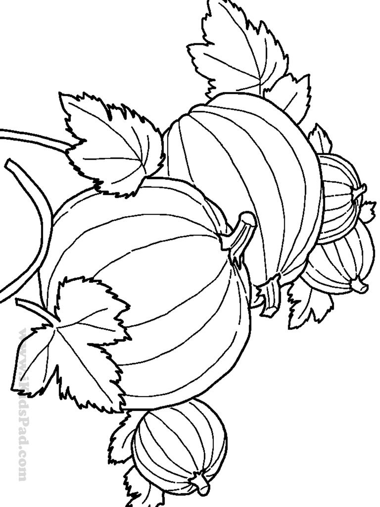 Výsledek obrázku pro fall pumpkin corn vegetable coloring | AUTUMN ...