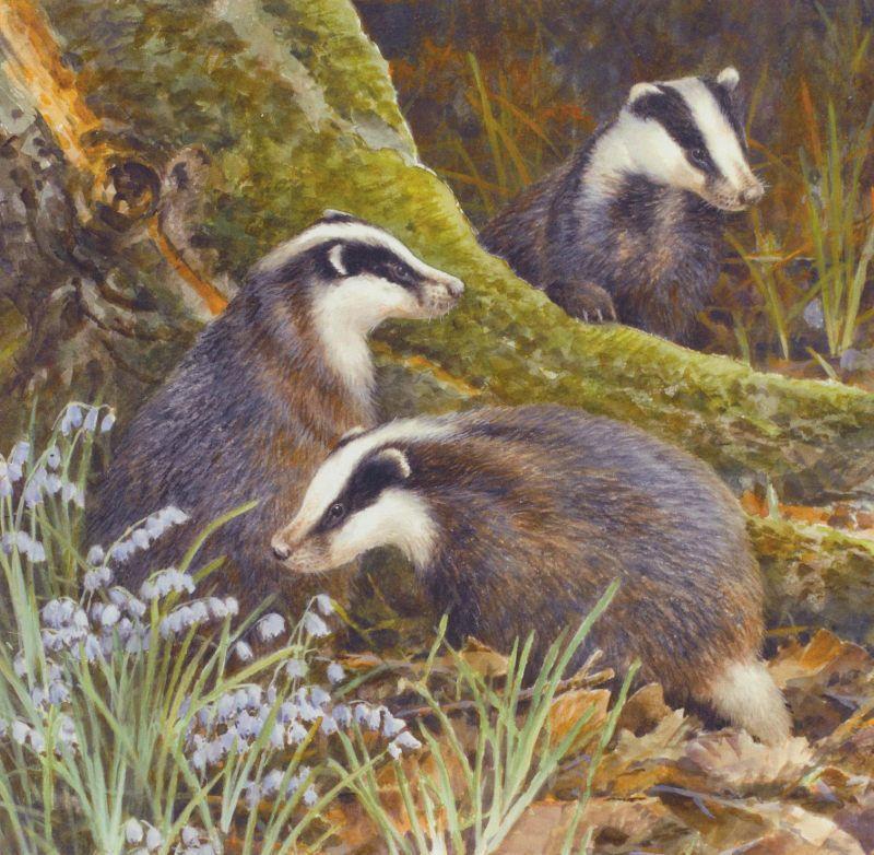 Badger Badgers British Wildlife Blank Birthday Or Greetings Card 1 99 British Wildlife Wildlife Badger