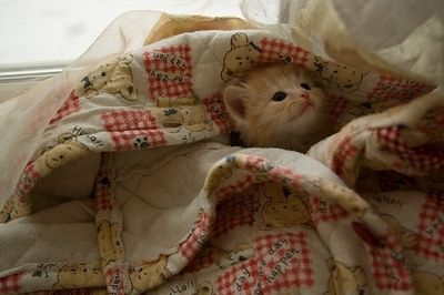 This little Kitten is having a blast playing hide-n-go-seek in this quilt