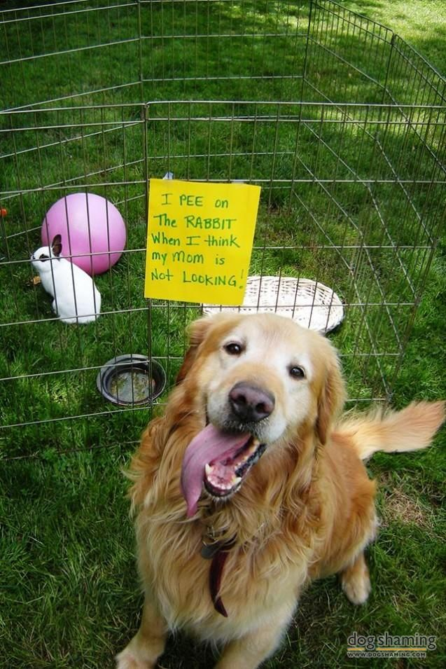 I Can't Hop Myself Cute funny dogs, Dog shaming, Funny dogs