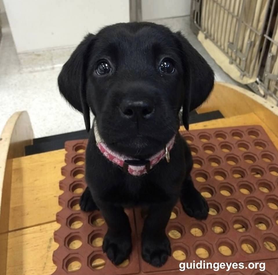 Future guide dog.