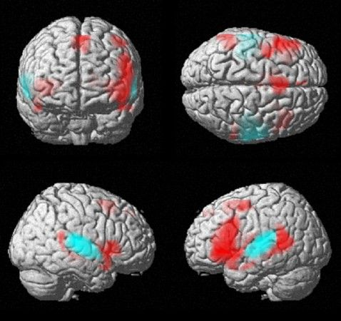 Right-Brain, Left-Brain Just a Myth, Say Neuroscientists | rePinned by CamerinRoss.com