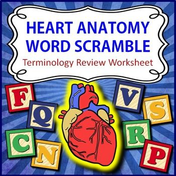 18+ Heart Anatomy Word Scramble   Review Worksheet   Printable & Distance Learning